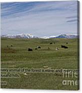 Cattle And Bible Verse Canvas Print