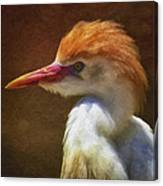 Cattle Egret 2 Canvas Print