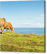 Cattle Grazing In Picturesque Meadow Canvas Print