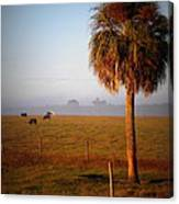Cattle Grazing On Foggy Morning 1 Canvas Print