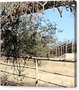 Cattle Ramp Canvas Print