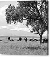 Cattle Ranch In Summer Canvas Print