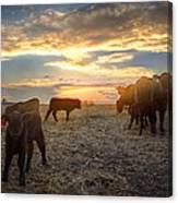 Cattle Sunset 2 Canvas Print