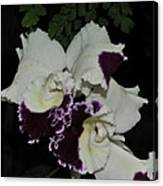 Cattleya Moscombe 'the King'  3 Of 3 Canvas Print