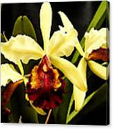 Cattleya Too Canvas Print