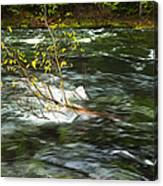 Caught By The Water Canvas Print
