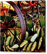 Caught In A Cactus Patch-sold Canvas Print