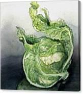 Cauliflower In Reflection Canvas Print