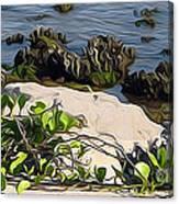 Causeway Shore Blues Canvas Print