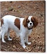 Cavalier Dog Canvas Print