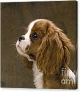 Cavalier King Charles Spaniel Dog Canvas Print