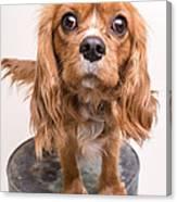 Cavalier King Charles Spaniel Puppy Canvas Print