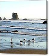 Cavorting Seagulls Canvas Print