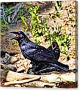 Caw And Friend Canvas Print