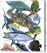 Cayman Collage Canvas Print