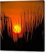 Cayo Grande Palm Tree Sunrise Canvas Print