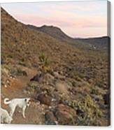 Ceaser, Mocha, And Chico In The Cerbat Mountains Canvas Print