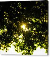 Cedar Filtered Sun Canvas Print
