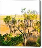 Cedar In The Marsh Canvas Print