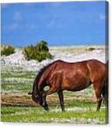 Cedar Island Wild Mustangs 59 Canvas Print