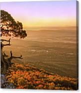 Cedar Tree Atop Mt. Magazine - Arkansas - Autumn Canvas Print