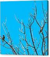 Cedar Wax Wings Canvas Print