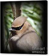 Cedar Waxwing Profile Canvas Print