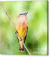 Cedar Waxwing Watercolor Art  Canvas Print