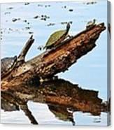 Happy Family Of Turtles Canvas Print