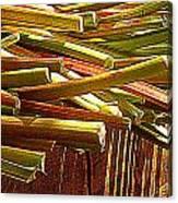 Celery In The Sun Canvas Print