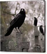 Cemetery Crows Canvas Print