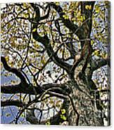Cemetery Oak Canvas Print
