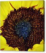 Center Of A Sunflower Canvas Print