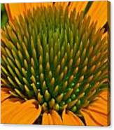 Center  Of Cone Flower Canvas Print