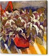 Centerfold  Canvas Print