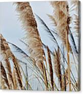 Central Coast Pampas Grass II Canvas Print