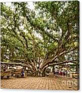 Central Court - Banyan Tree Park In Maui. Canvas Print