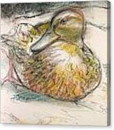 Central Park Duck On The Rocks Canvas Print
