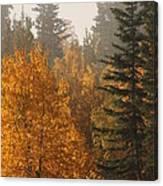 Central Park Yukon Canvas Print
