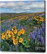 Central Washington Spring Canvas Print