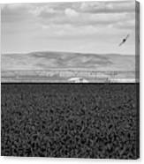 Central Washington, Usa. A Crop Duster Canvas Print