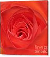 Centre Of A Rose Canvas Print