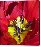 Centre Of A Tulip Canvas Print