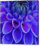 Centre Of Blue And Purple Dahlia Flower Canvas Print
