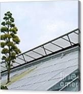 Century Plant Canvas Print
