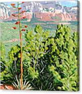 Century Plant - Sedona Canvas Print