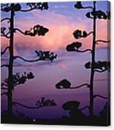 Century Sunset Canvas Print