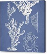 Ceratodictyon Spongiosum Zanard Canvas Print