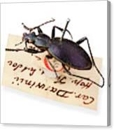 Ceroglossus Beetle Canvas Print