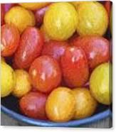 Cezanne Style Digital Painting Fresh Juicy Heirloom Tomatoes In Rustic Setting Canvas Print